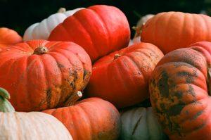 62Autumn HarvestPaul Suskin Onondaga County