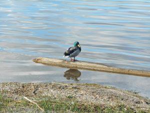 106Onondaga Lake ParkLinda Tweedie Onondaga County