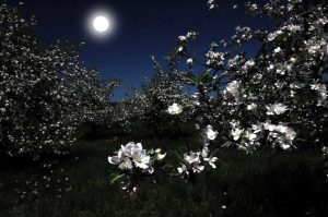 84A night in the orchardTimothy Kane Onondaga County