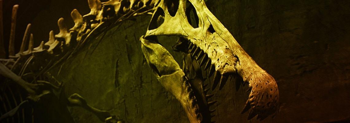 NOVA Bigger Than T rex Nature Dinosaur Documentary