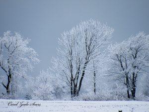 84Silver, Blue and GreyCarol SearsOnondaga County