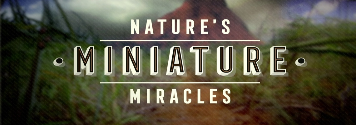 1122 Nature