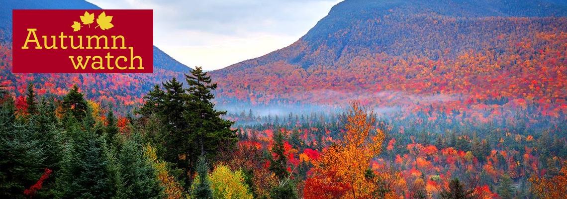 17 Autumnwatch New England