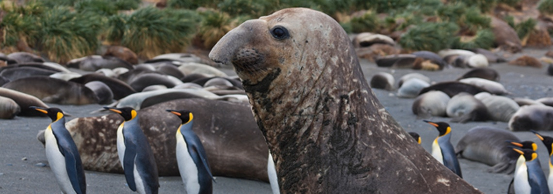 Antarctica: Tales from the End of the Earth Watch Wednesday, Dec. 19 at 10 p.m. on WCNY