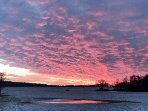 140 Morning GloryMichelle Danti Oneida County