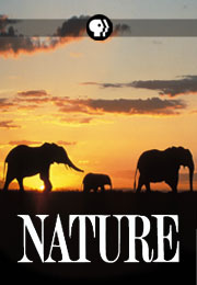 20130516_poster_nature