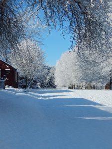 53Walking in a Winter Wonderland Marshall Handfield Ontario County
