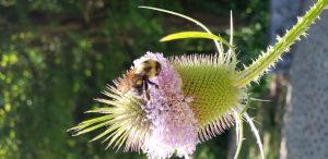 78 Bee a Good Steward!Belinda Cole Onondaga County