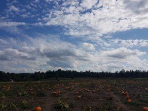 9 Vast Splendor Mara Kinney Onondaga County