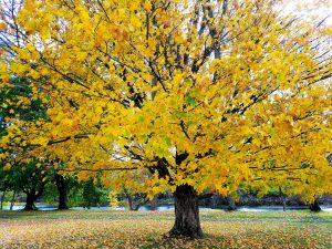43Shedding Colors Chris Bullis Herkimer County