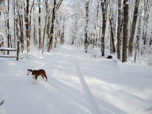 64 Quiet North Hauschild Cortland County