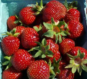 24Summer StrawberriesLisa Cartwright Onondaga County