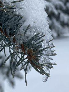 67 Winter's LullabyKate Elstad Onondaga County
