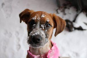 88 Snow DayAlyssa Domanski Onondaga County