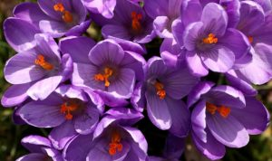 5 Smell the violets