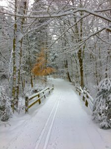 109 Ski trail with beech treeHelen MacGregor Onondaga County