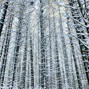 100 Winter SoldiersLynn Harvey-Cantone Onondaga County