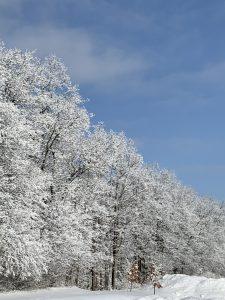 94 Winter MagicPatty Owens Onondaga County