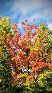 8Eastwood foliage Jeff Pritchett Onondaga County