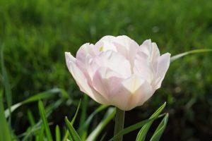 70April Showers Bring May FlowersJohn Lukach Cortland County