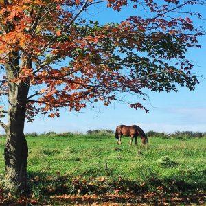 31Fall Foal-iageRebecca Carr Cayuga