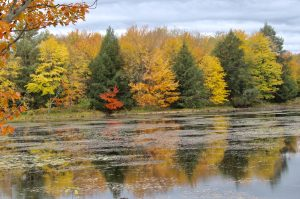 26 A Reflection of BeautyElizabeth LaMay Oswego County