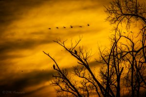 68Eagles in the sunsetDaniel CameronCayuga County