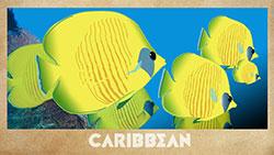 Caribbean_250