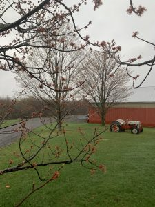 60New buds for springTracy Kinsella Oneida County