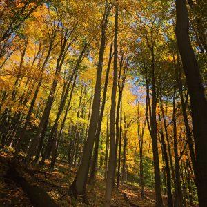 100 Mello YellowLynn Harvey-Cantone Onondaga County