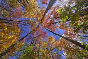 35Nature's Color Palette David Spaulding Schuyler County