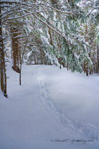 33Silence of the ForestDavid SpauldingCortland County