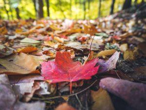 22Falling Leaves John Lukach Cortland County
