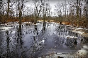 79 Winter at Mud CreekJan Miner Onondaga County