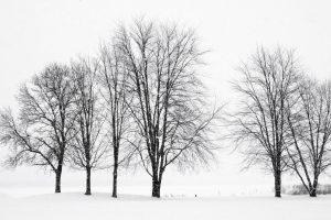 100Trees of WinterJan MinerOnondaga County