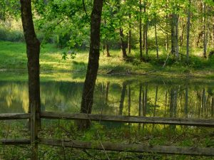 2Springs ReflectionKelly Mercurio Herkimer  County