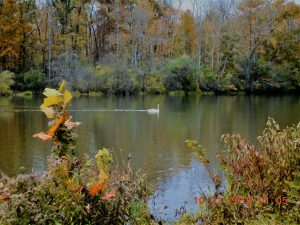 80Onondaga Lake Park (near Wegman's Dog Park)Gloria Mazin Onondaga County