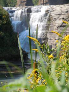 8 Hidden BeautyKim Pavlus Wayne County