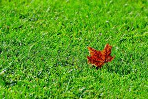 27 Autumn Michael Nanton Onondaga County