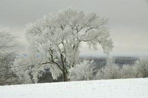 59Coated in IceBarbara LinsleyMadison County