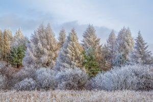 125 Winter WonderlandBrooke Ryan Madison County
