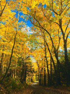 42 Autumn Day Helen MacGregor Onondaga County