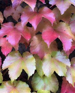 31 Fall leafsJeff Pritchett Onondaga County