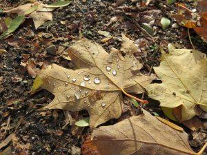 90Fresh Fall LeafJodi Oaks Oneida County