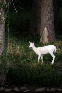 5Real-life Unicorn Davey Walters Seneca County
