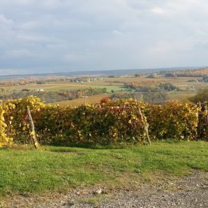16An unnamed vineyard on Keuka LakeJames Crumb Cayuga County