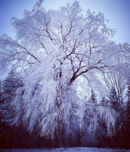 11 Hoar FrostKate Stewart Madison County