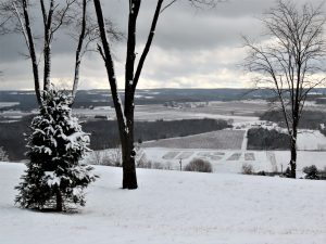 83USA in SnowNancy PeekYates County