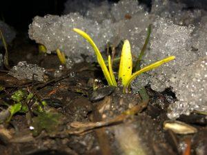 16Here comes Spring!Michael Nanton Onondaga  County