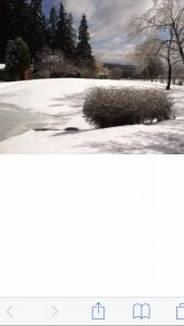 15 The Color of WinterAngela Bartow Schuyler County
